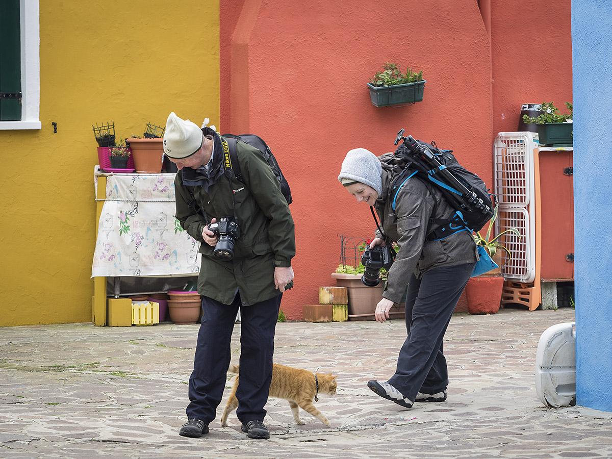 Venice-cats