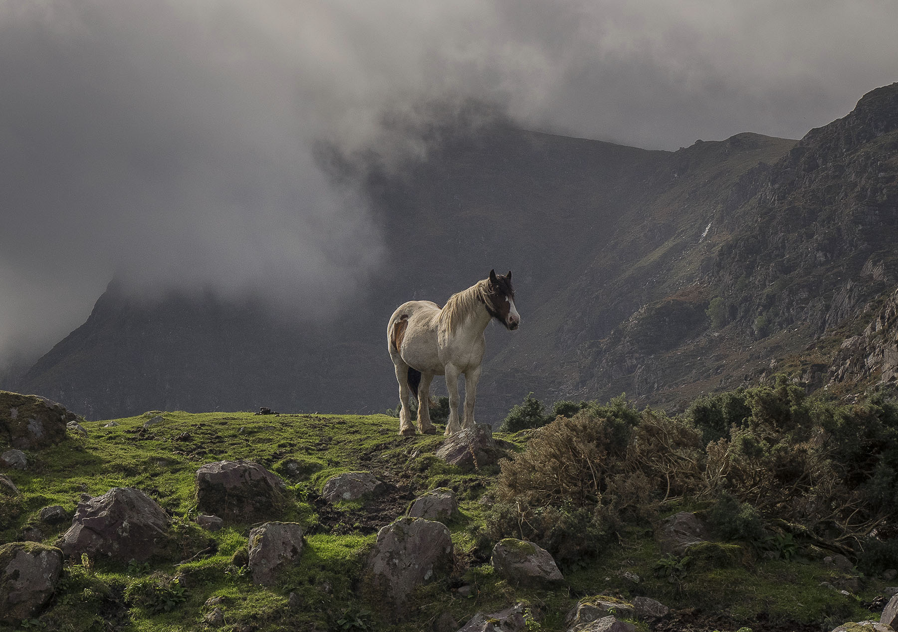 Gap of Dunlop horse , Kerry