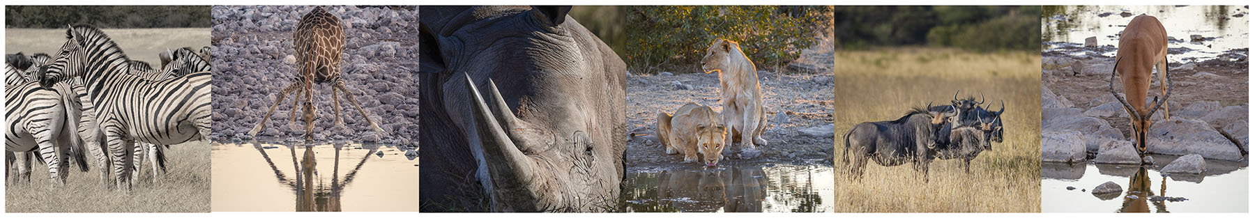 Namibia photo wildlife
