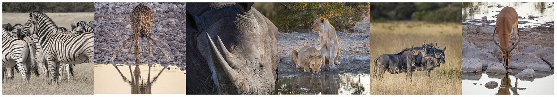 Namibia photo wildlife